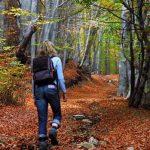 w-jock-woods